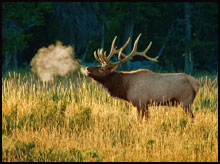 West Elk Wilderness Elk Hunts